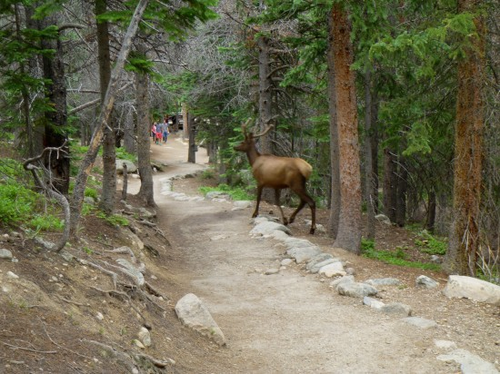 Elk just 500 feet up the path