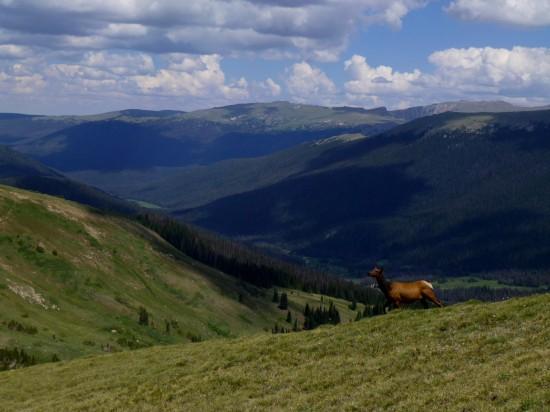 Picturesque elk sighting