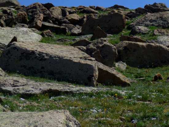 Marmots spotted among the rocks!