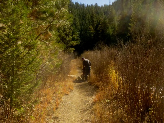 Brushy Narrow Gauge Trail continues into Pine National Forest