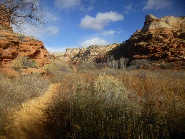 Scene near the beginning of the hike to Lower Calf Creek Falls