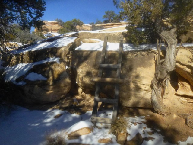 Wooden ladder - a staple of hiking in Natural Bridges - along the Mesa Trail