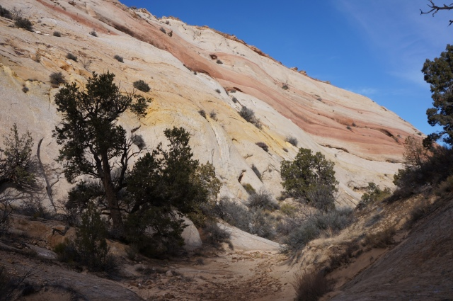 Pink ribbon wave in Surprise Canyon, Capitol Reef National Park