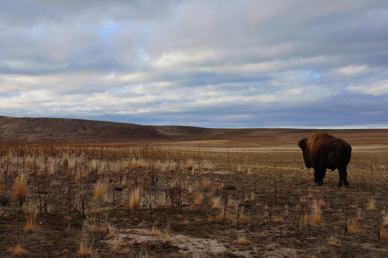 Antelope Island State Park, Utah Guide | Fodor's Travel