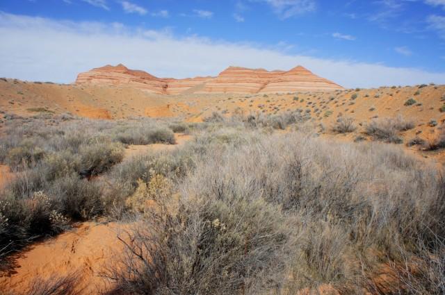 Brushy riparian area west of the slot, just below the Bullfrog RV Park; Hoskinnini Mesa looms above