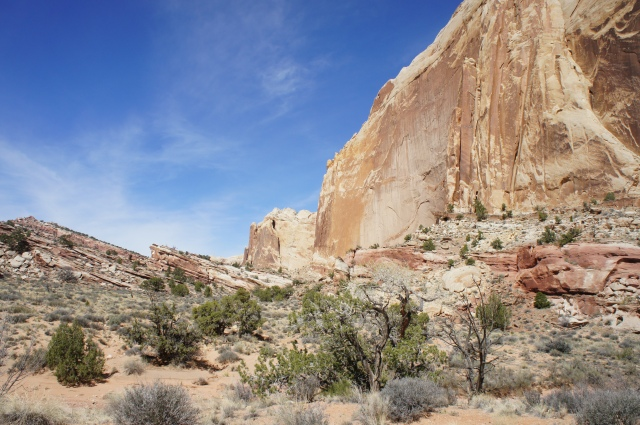 Endless line of Navajo sandstone, Lower Muley Twist Canyon, Capitol Reef National Park