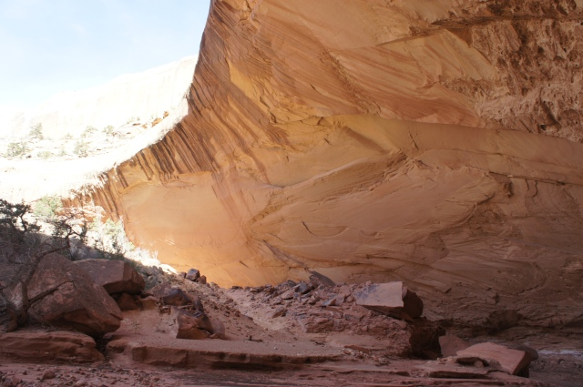 Yet another enormous alcove in Lower Muley Twist Canyon, Capitol Reef National Park