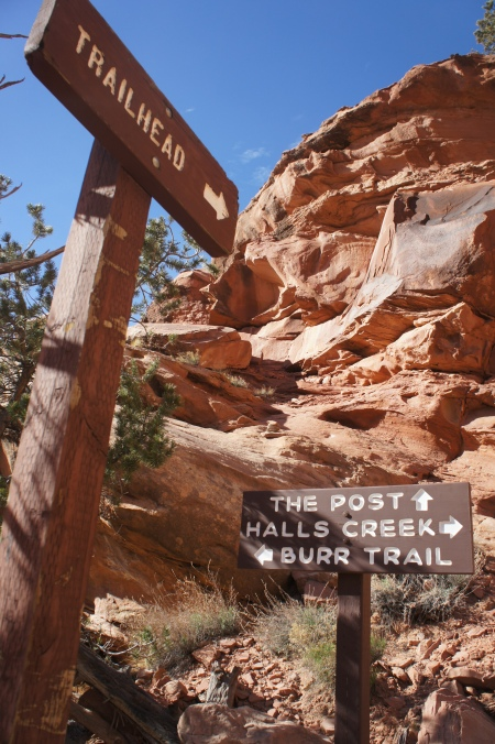 Start of Post Cut-off route from Lower Muley Twist Canyon, Capitol Reef National Park