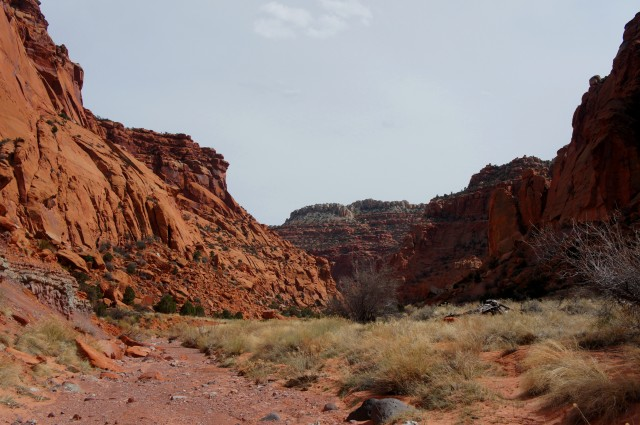 View southeast, down Upper Spring Canyon, Capitol Reef National Park