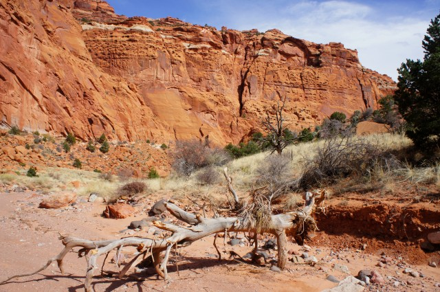 Upper Spring Canyon, Capitol Reef National Park, March 2015