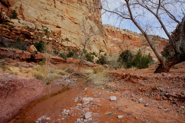 Start of the spring water, Upper Spring Canyon, Capitol Reef National Park