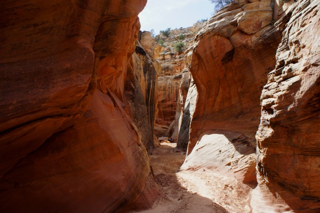 Start of the narrows in Cottonwood Wash, Capitol Reef National Park