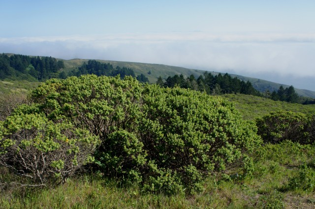 View southeast from the Dipsea Trail