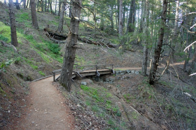Lower Old Mine Trail, en route to Pantoll, Mount Tamalpais State Park