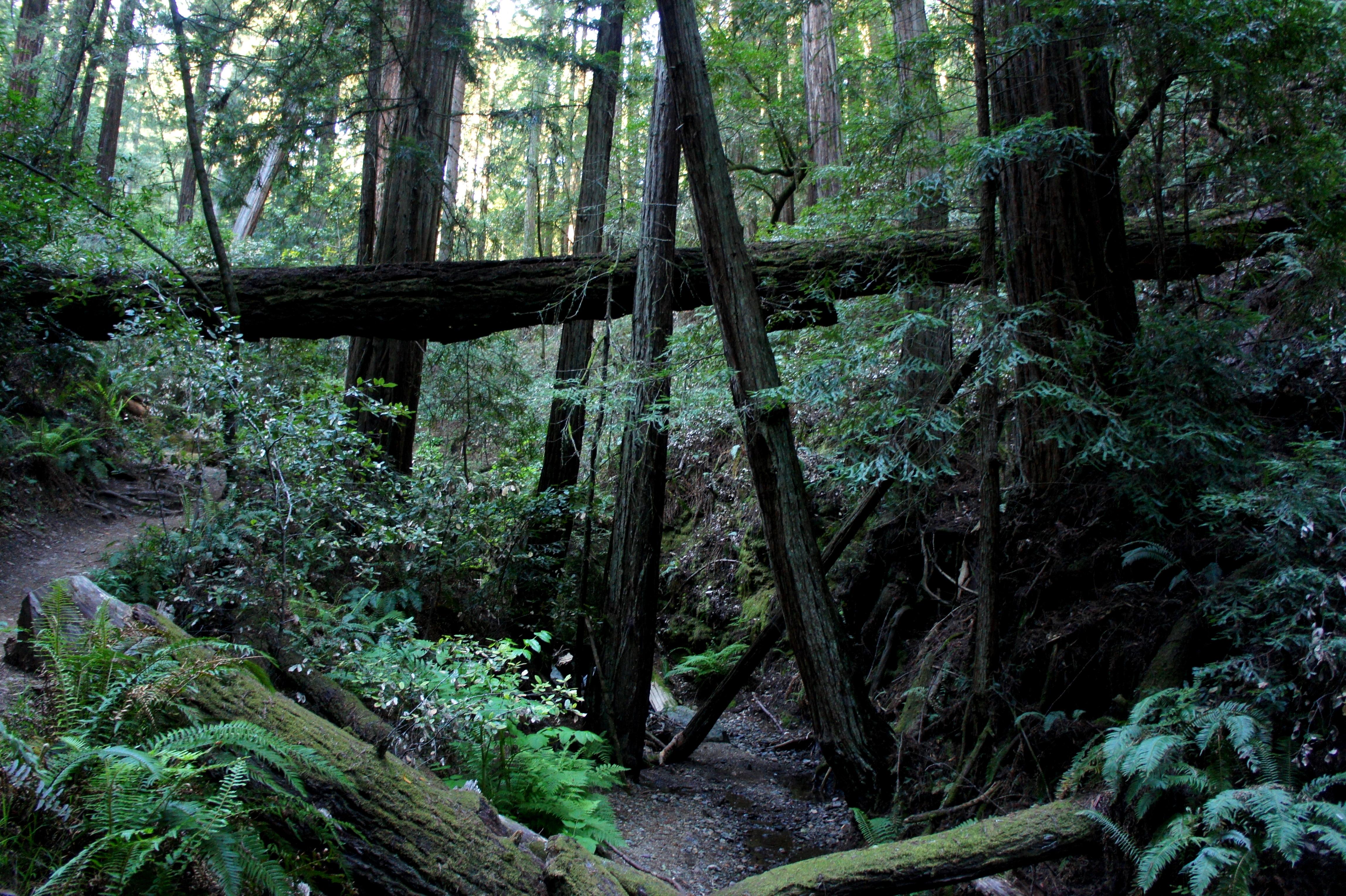 Dipsea Trail – Steep Ravine Trail Loop (Mount Tamalpais State Park on