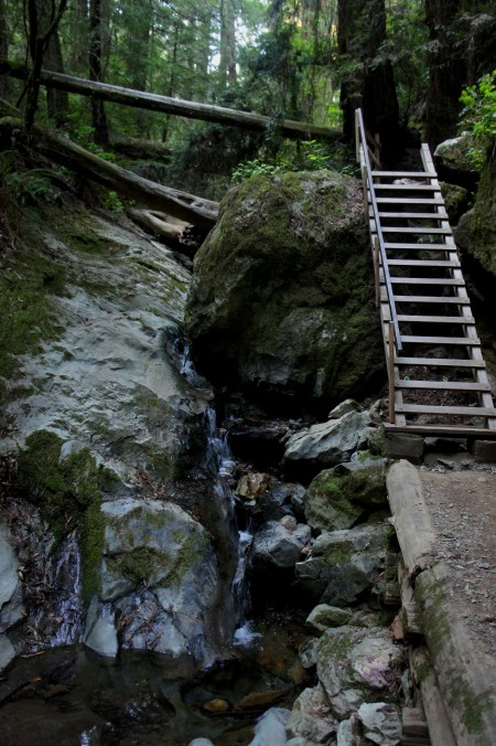 10-foot ladder and falls along the Steep Ravine Trail, Mount Tamalpais State Park