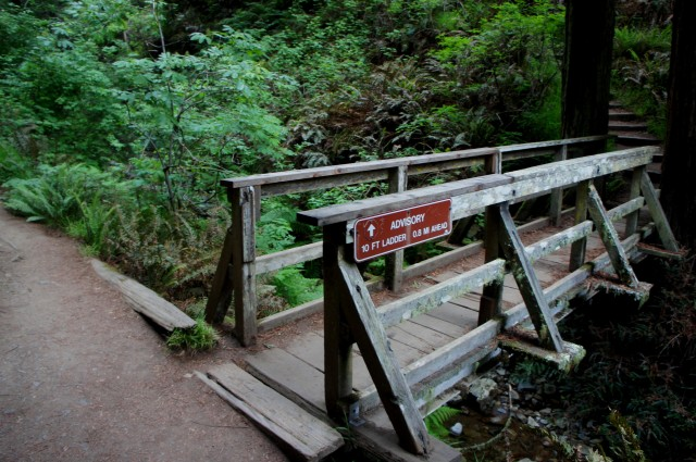 Bridge at the junction of the Steep Ravine and Dipsea Trails, Mount Tamalpais State Park