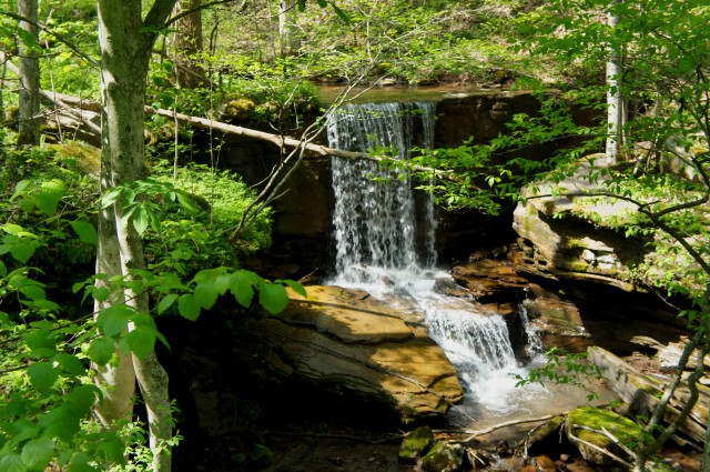 15-foot waterfall on Big Branch