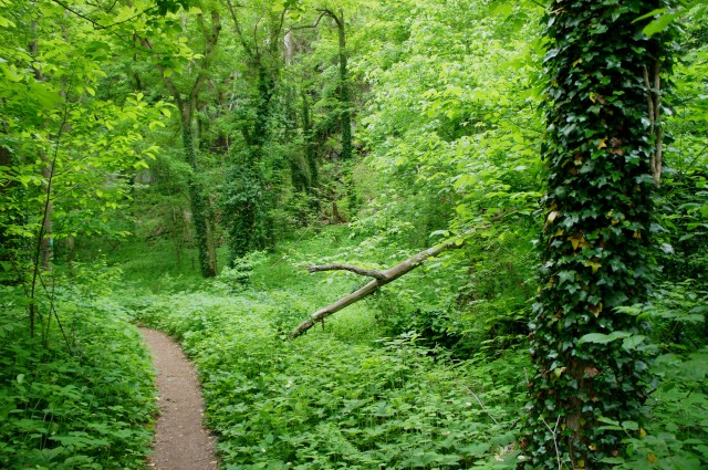Dense greenery on the Potomac Heritage Trail