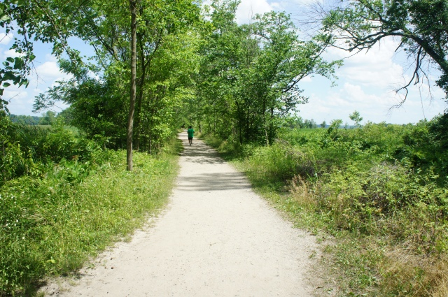 Haul Road Trail in Dyke Marsh Wildlife Preserve