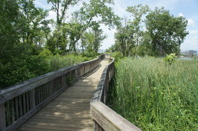 Haul Road Trail, Dyke Marsh Wildlife Preserve, George Washington Memorial Parkway, May 2015