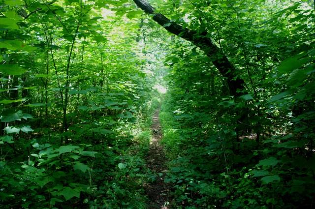 Piney Ridge Trail, Shenandoah National Park