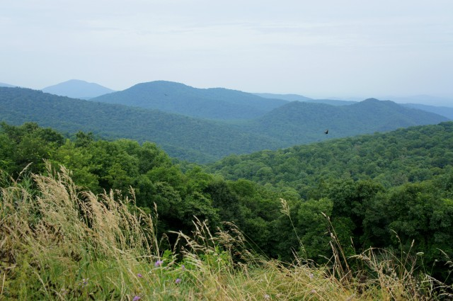 View of Thornton River area from Thornton Hollow Overlook along Skyline Drive
