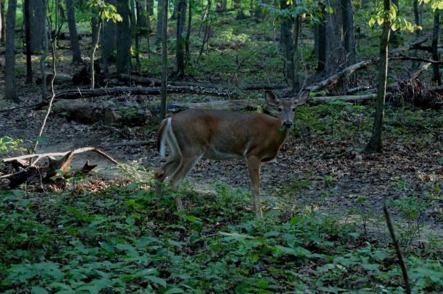 Wildlife in Lake Fairfax Park