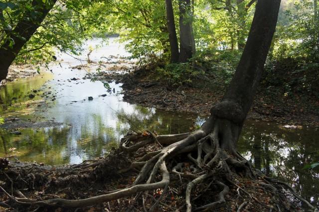 Bluebell Trail, Shenandoah River State Park