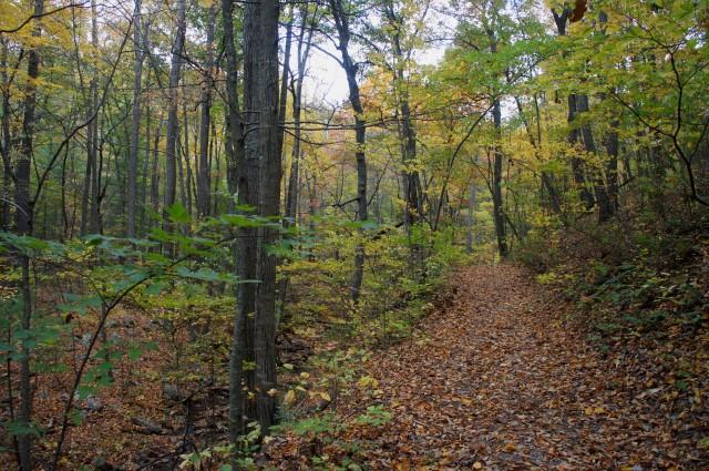 Veach Gap Trail and Mill Run
