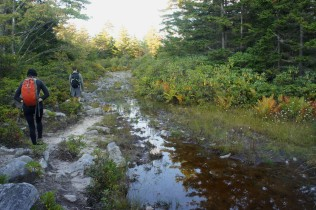 Dobbin Grade Trail runs through a muddy bog
