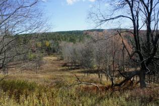 Meadow view on the Blackbird Knob Trail