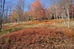Beautiful fall colors along the Blackbird Knob Trail