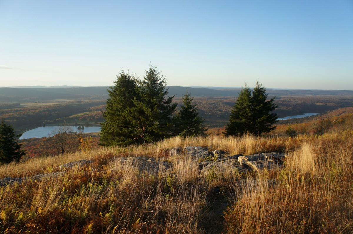 Blackbird Knob Loop (Dolly Sods Wilderness, WV)