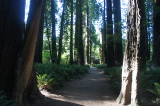 Stout Grove Trail