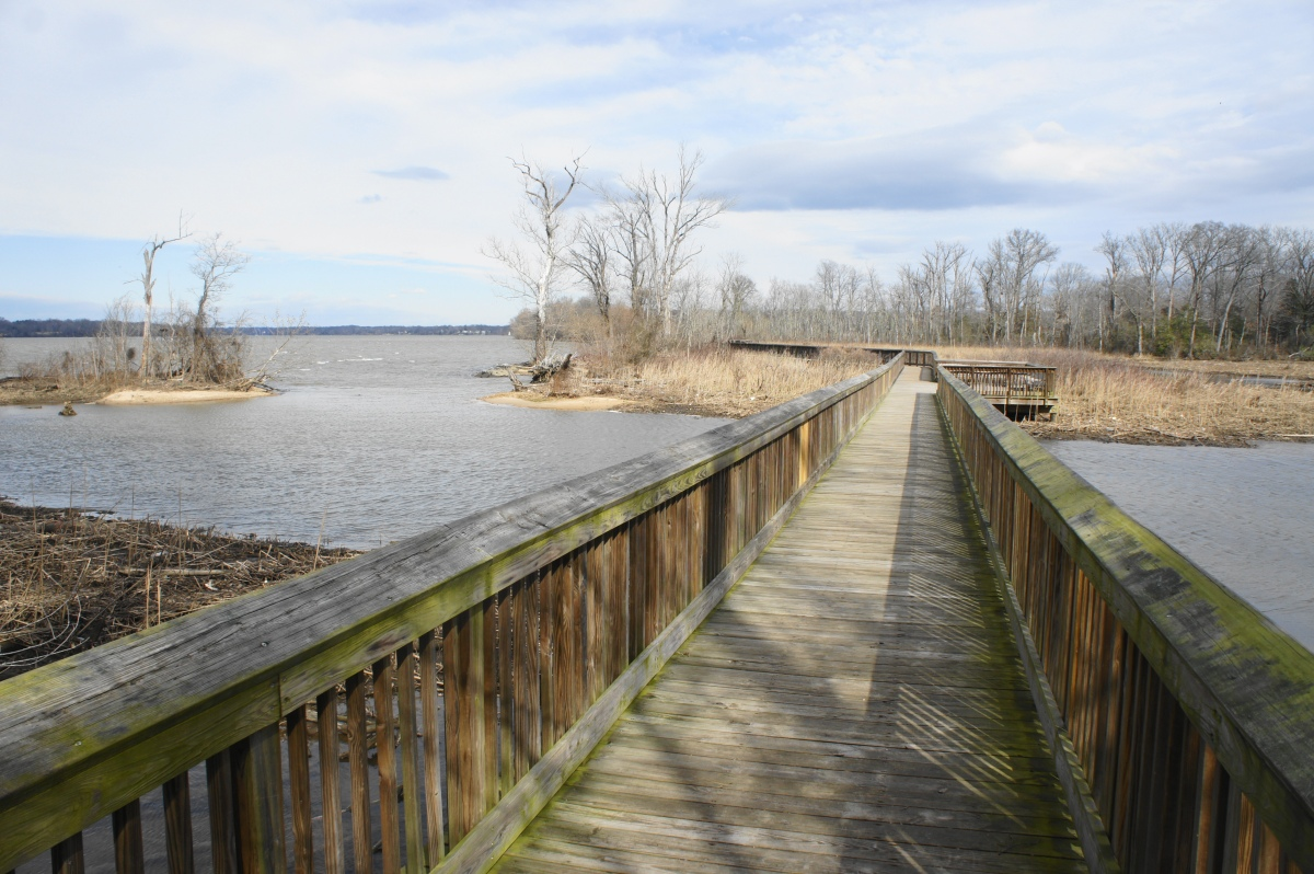 Accokeek Creek Marsh Boardwalk & Mockley Point Trail (Piscataway Park, MD)